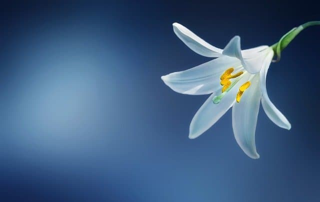 Brighten up your dear ones Lives with Beautiful Lily Flowers