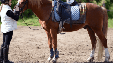 7 Profitable Business Ideas for Horse Lovers